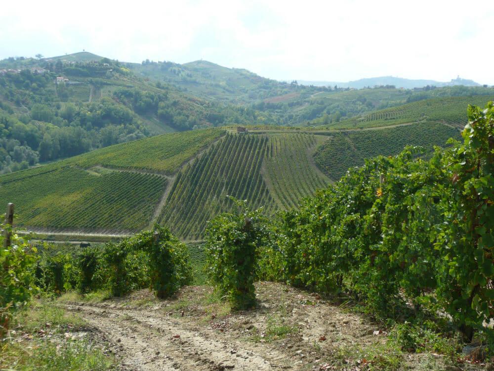 Vinmarkerne - nærmeste omegn